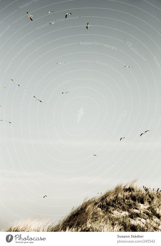 Spiekeroog | vogelfrei Hügel Jagd genießen Stranddüne Düne füttern