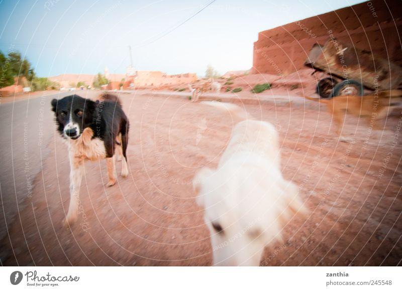 dogs Ferien & Urlaub & Reisen Freude Tier Hund Straße Bewegung Wege & Pfade Freundschaft Freizeit & Hobby laufen rennen Tiergruppe Neugier entdecken