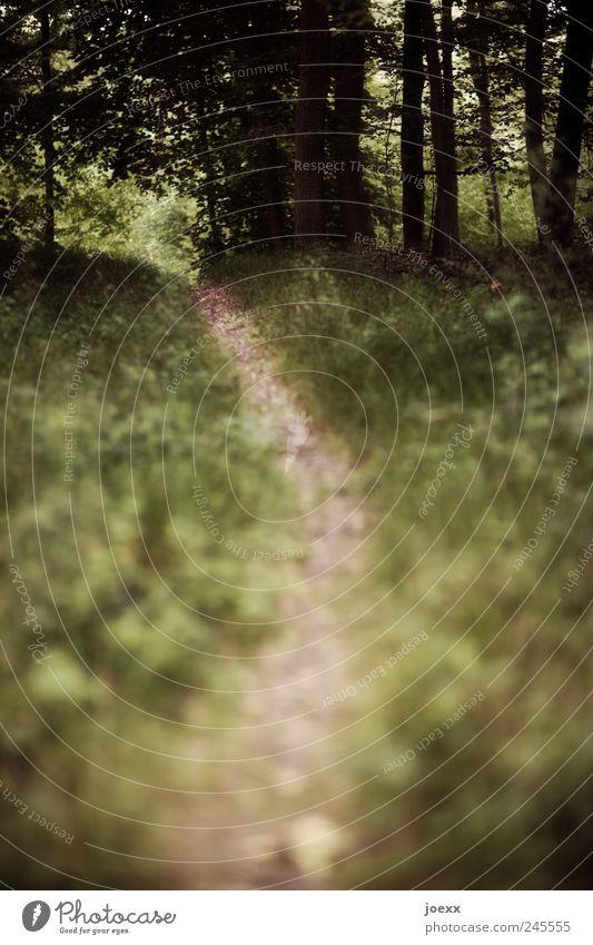 Dein eigener Weg Natur Sommer Wald Wege & Pfade ruhig Farbfoto Gedeckte Farben Außenaufnahme Menschenleer Tag Schwache Tiefenschärfe