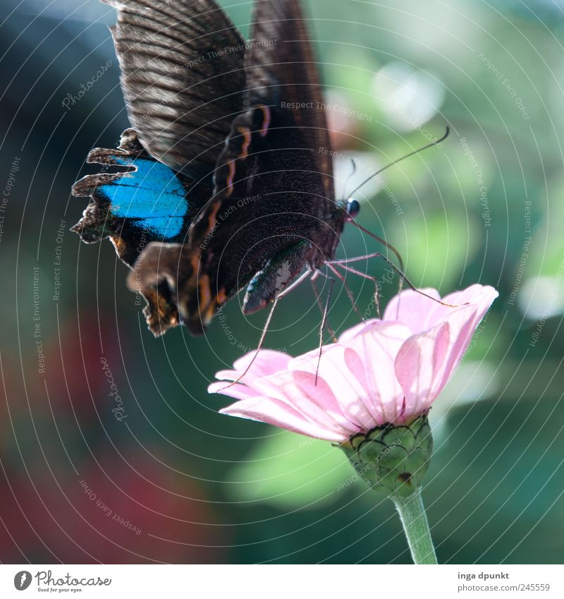 Natur blau Pflanze Sommer Blume Tier Leben Gefühle Blüte Frühling Garten träumen Umwelt Park rosa natürlich