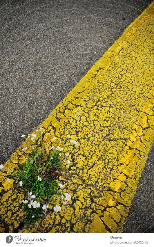 urbanes Grün Straße Teer Asphalt grau schwarz gelb Fahrbahnmarkierung Linie Streifen diagonal verfallen verwittert Pflanze Blume Unkraut Blüte widersetzen Kraft