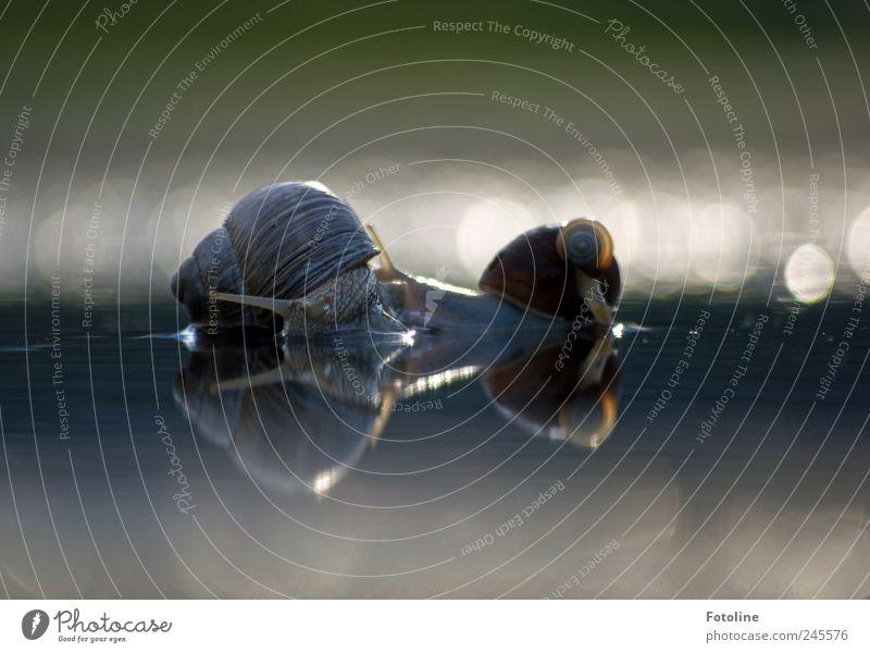 Schneckentreff Natur Wasser Sommer Tier Umwelt Park nass natürlich Wildtier Urelemente Pfütze krabbeln Weinbergschnecken Weinbergschneckenhaus
