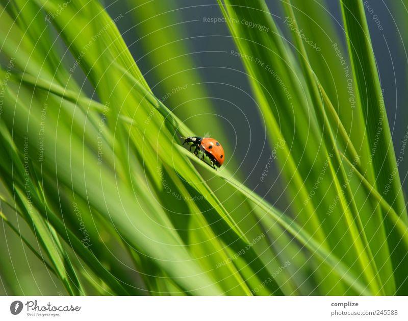 Freitag der 13te Erholung Sommer Frühling Pflanze Gras Sträucher Grünpflanze Nutzpflanze Garten Park Wiese Käfer Tier krabbeln Glück grün Natur Umweltschutz