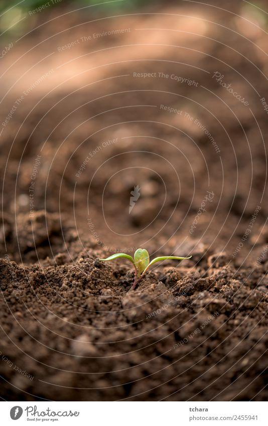Neues Werk Gemüse Kaffee Geld Leben Garten Gartenarbeit Kapitalwirtschaft Business Umwelt Natur Pflanze Erde Frühling Baum Blatt Wachstum frisch klein natürlich