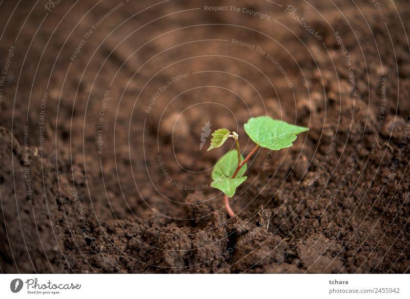 Neues Leben Gemüse Kaffee Geld Garten Gartenarbeit Kapitalwirtschaft Business Umwelt Natur Pflanze Erde Frühling Baum Blatt Wachstum frisch klein natürlich neu