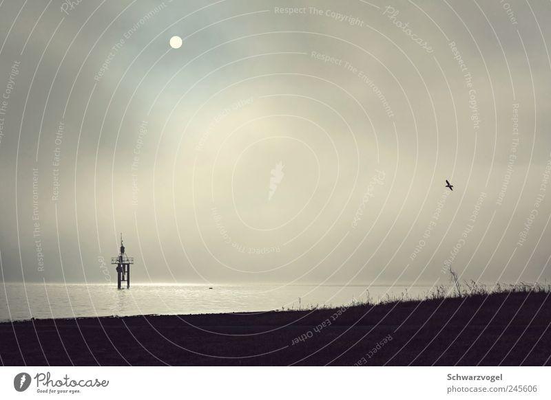 Flieger, grüß mir die Sonne Himmel Natur Wasser Sonne Ferien & Urlaub & Reisen Einsamkeit Tier Erholung Freiheit Bewegung Landschaft träumen Umwelt Stimmung See Luft