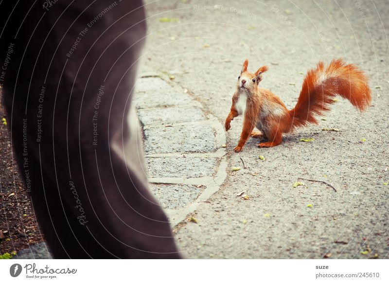 He Großer, wo bleibt die Nuss? Mensch rot Tier Wege & Pfade grau klein natürlich Beine braun Freizeit & Hobby wild sitzen Wildtier authentisch niedlich Spaziergang