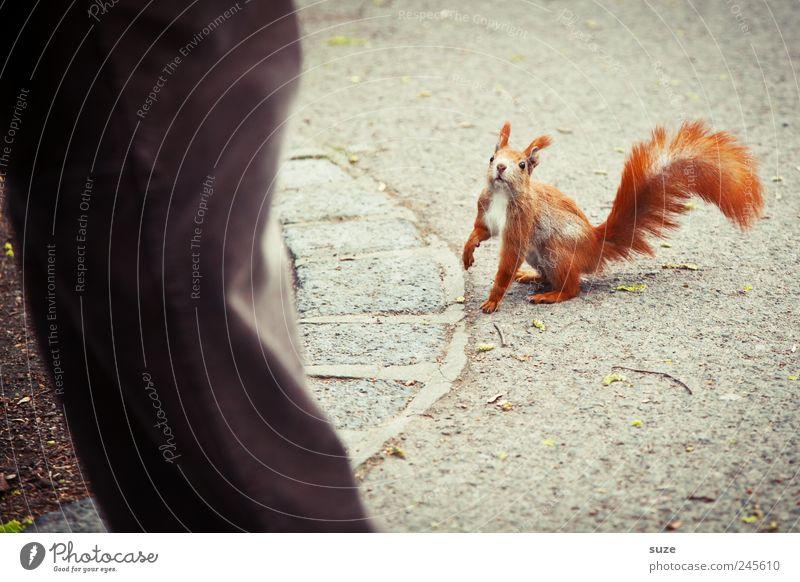 He Großer, wo bleibt die Nuss? Mensch rot Tier Wege & Pfade grau klein natürlich Beine braun Freizeit & Hobby wild sitzen Wildtier authentisch niedlich