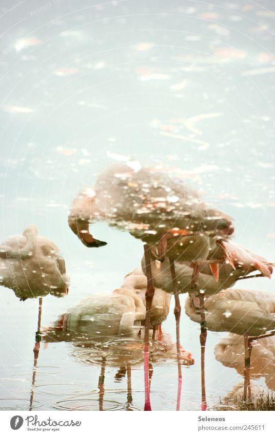 Flamingos in der Suppe Himmel Natur Wasser Sommer Tier Umwelt See hell nass Ausflug Tourismus Tiergruppe Flügel Zoo kuschlig