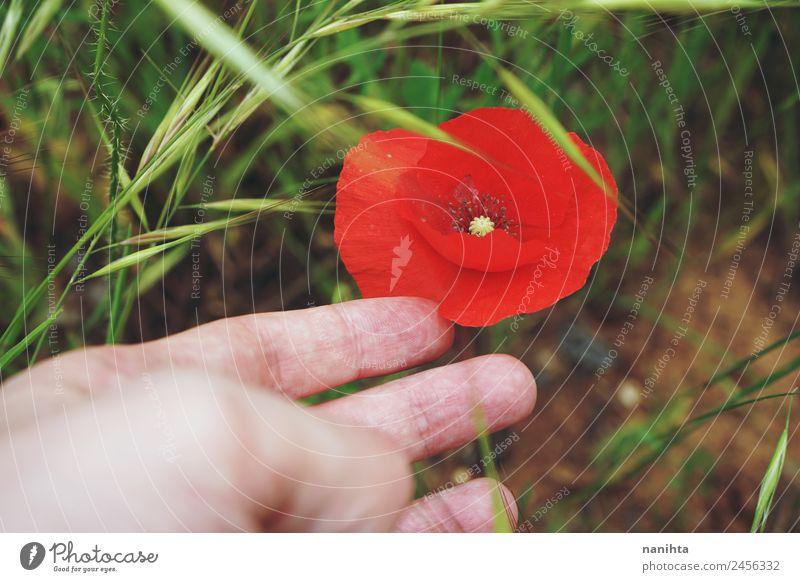 Handkontakt mit einem roten Mohn Finger Natur Landschaft Pflanze Frühling Sommer Blüte Wildpflanze berühren Blühend ästhetisch authentisch einfach frisch nah