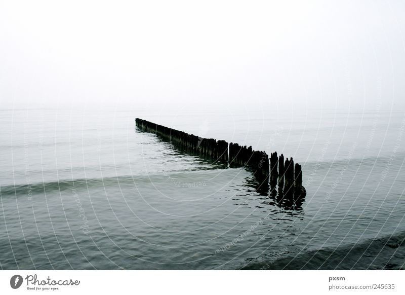 Stöcke im Wasser Horizont Nebel Wellen Strand Meer Møn Dänemark Europa Holz Blick Schwimmen & Baden träumen grau schwarz weiß Stimmung friedlich Natur Umwelt