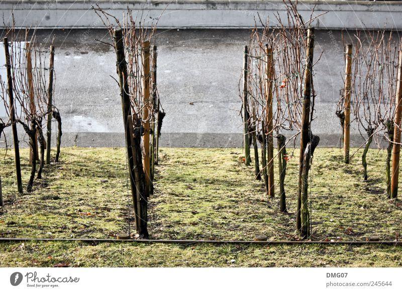 StadtWein Natur Sommer Wiese Feld alt Traurigkeit Trägheit Stadtzentrum Land grau grün Weinberg Straße Farbfoto Außenaufnahme Menschenleer Morgen Tag