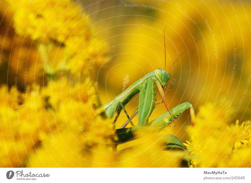 Natur grün Pflanze Sommer Blume Blatt Tier gelb Spielen Garten Gras Blüte Bewegung Park gold authentisch