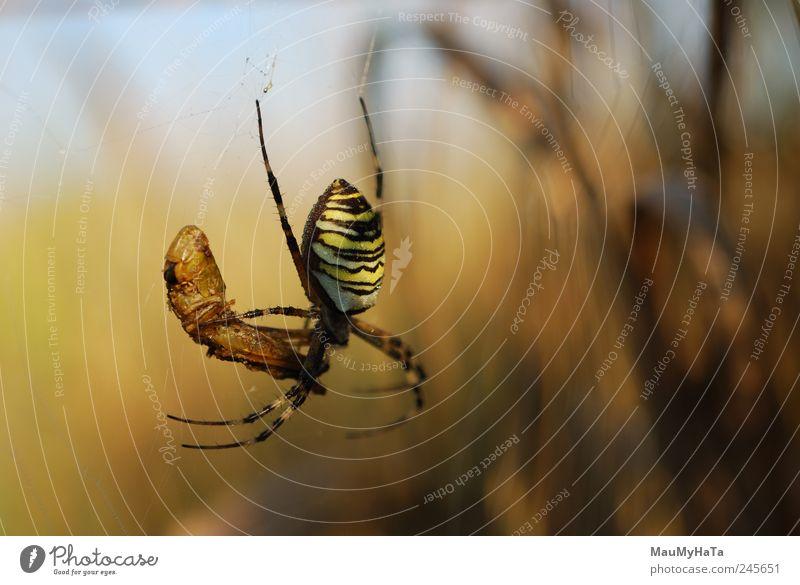 Natur Pflanze Blatt Tier Tod Garten Gras Park gefährlich Macht Schutz Appetit & Hunger Spinne Ärger Wurm Morgen