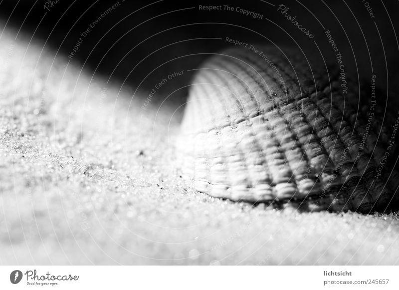 Halbschatten Umwelt Natur Sand Küste Strand Nordsee Ostsee Meer Insel schwarz weiß Muschel Muschelschale Nahaufnahme Sandkorn Kontrast Riffel Lichteinfall