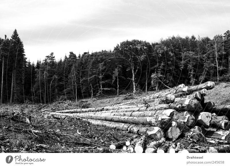 Alles hat ein Ende Landwirtschaft Forstwirtschaft Förster Säge Axt Umwelt Natur Sommer Klimawandel Baum Wald Abholzung Traurigkeit Trauer Schmerz