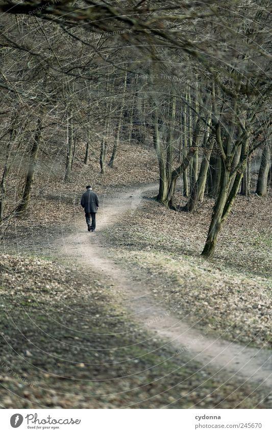 Einsamer Spaziergänger Mensch Mann Natur Baum ruhig Senior Einsamkeit Ferne Wald Erholung Leben Umwelt Landschaft Wege & Pfade träumen Park