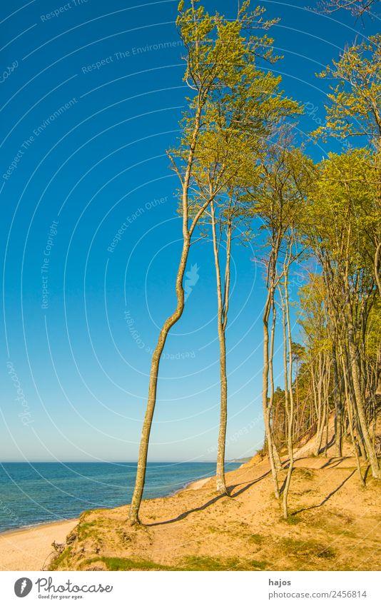 Ostseeküste in Polen Ferien & Urlaub & Reisen Baum Meer Einsamkeit Strand Reisefotografie Tourismus Sand wild Idylle Naturschutzgebiet Riff