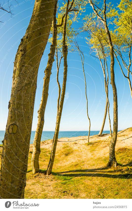 Ostseeküste in Polen Ferien & Urlaub & Reisen Strand Küste Riff blau gelb Orzchechowo Dünen Bäume Natur Naturschutzgebie wi einsam schön unberührt Farbfoto