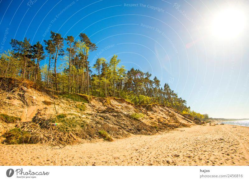 Strand an der polnischen Ostseeküste Ferien & Urlaub & Reisen Natur Sand Baum Riff Tourismus Dünen Bäume Gegenlicht Sonne Som hell Sandstrand leer Einsamkeit