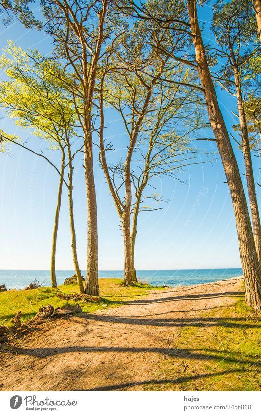 Ostseeküste in Polen Ferien & Urlaub & Reisen Strand Sand Baum Riff Tourismus Düne Bäume Meer blau Himmel Weitblick natürli Orchzechowo Naturschutzgebiet Sommer