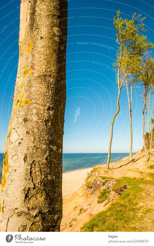 Ostseeküste in Polen Ferien & Urlaub & Reisen Strand Sand Riff Tourismus Ostseestrand Dünen Kiefern weiß Himmel blau wild einsam schön unberührt naturschutz