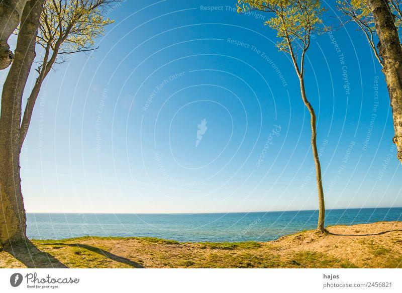 Ostseeküste in Polen Strand Natur Tourismus Osteeküste Dünen Bäume Himmel blau Sand wasser schön wi einsam Paradis karibisch Farbfoto Außenaufnahme Menschenleer