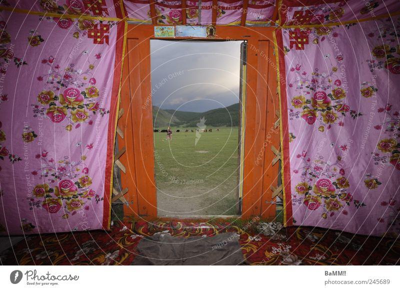 tür zur welt Natur Ferne Freiheit Tür rosa Abenteuer Häusliches Leben Dekoration & Verzierung Hügel Kitsch Hütte Identität Steppe Herde Asien Muster