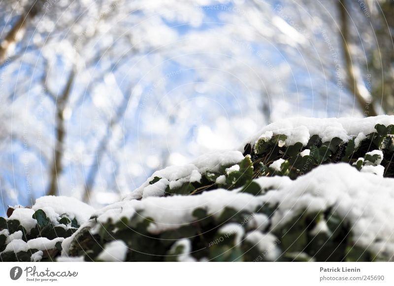 Last Christmas Natur weiß blau schön Pflanze Winter Wald Leben Erholung kalt Schnee Freiheit Umwelt Stimmung Luft Wetter