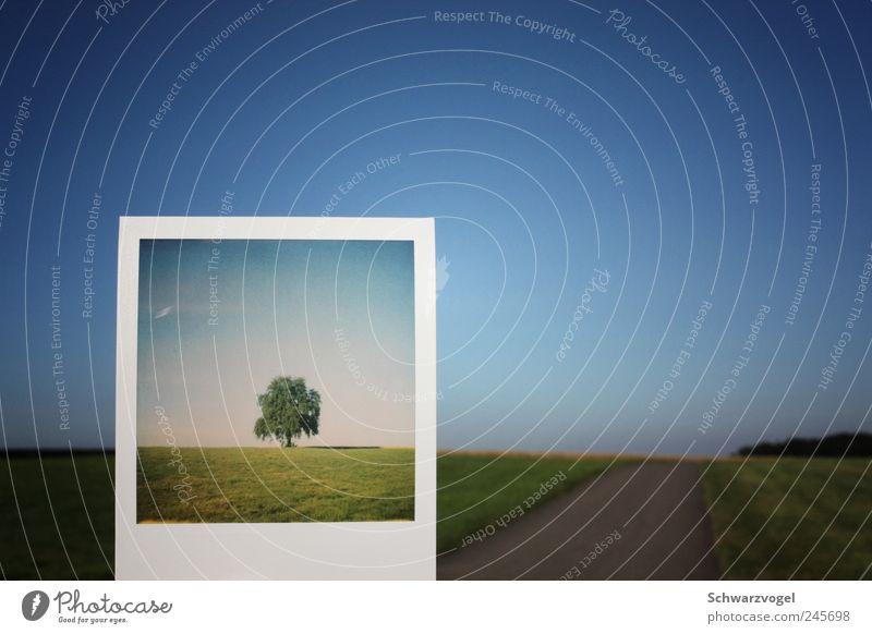Fake Plastic Tree Umwelt Natur Landschaft Pflanze Himmel Wolkenloser Himmel Feld blau grün Zufriedenheit Klima nachhaltig ruhig stagnierend Vergangenheit