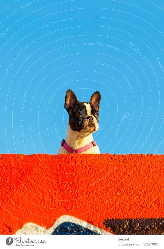 netter Hund am Strand, Frankreich Erholung Sonne Meer Himmel Wolken Felsen Küste Leuchtturm Haustier genießen Sonnenuntergang Baskenland euskal herria baske