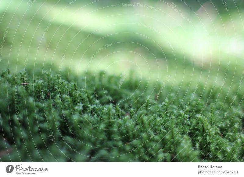 Ohne Moos nichts los Natur Pflanze Grünpflanze liegen Wachstum kuschlig weich grün Geborgenheit Reinlichkeit Sauberkeit ästhetisch Erholung Gelassenheit