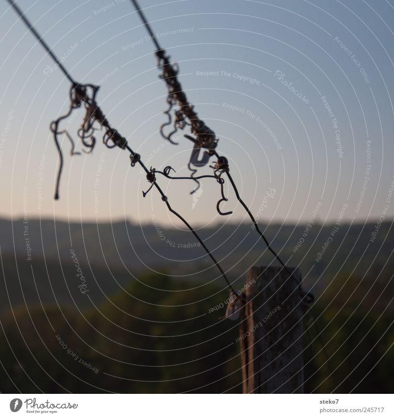 morgendliches Wirrwarr Wald Hügel blau grün Weinberg Drahtseil durcheinander Knoten Holzpfahl Farbfoto Gedeckte Farben Außenaufnahme Detailaufnahme Menschenleer