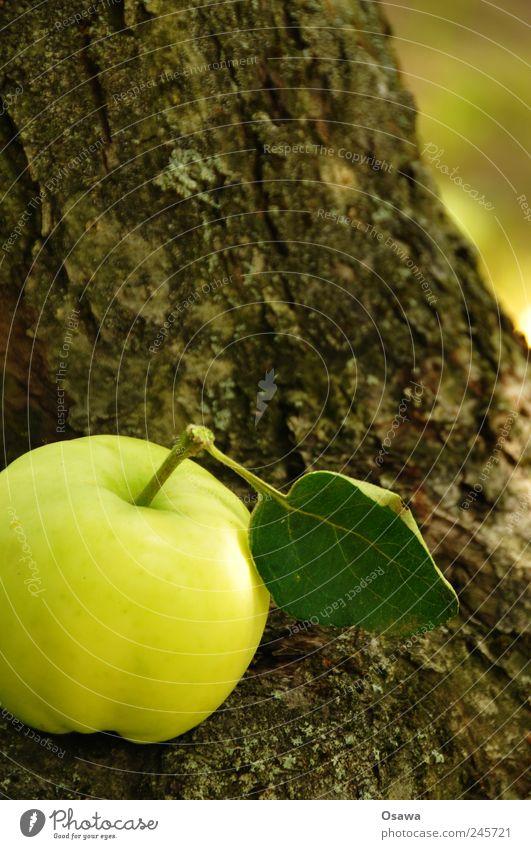Apfel Lebensmittel Bioprodukte Natur Pflanze Baum Blatt Nutzpflanze Baumstamm Baumrinde Gesundheit grün frisch Vitamin braun Strukturen & Formen Farbfoto