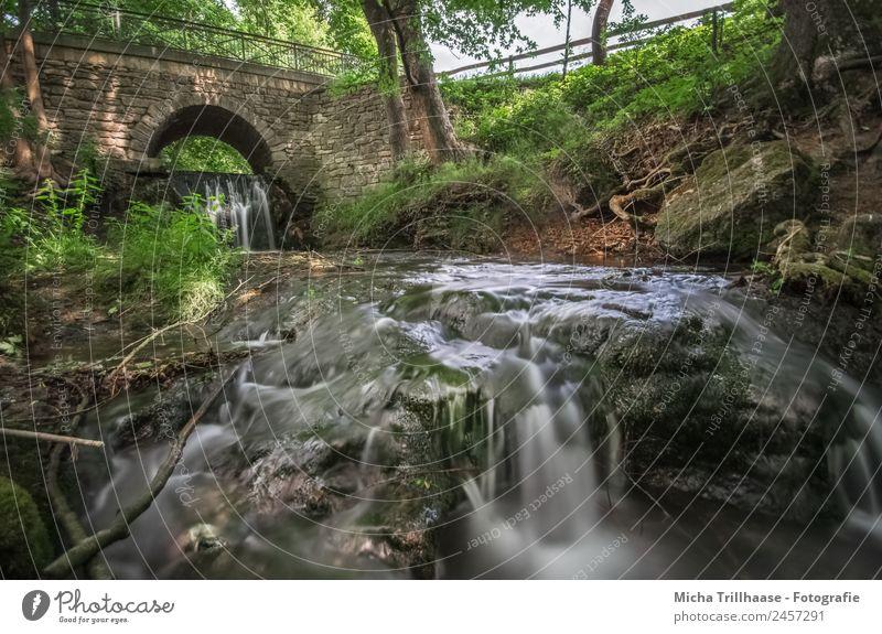 Fließendes Wasser und Brücke Tourismus Abenteuer Umwelt Natur Landschaft Sonne Sonnenlicht Schönes Wetter Baum Sträucher Wald Bach Fluss Wasserfall Stein