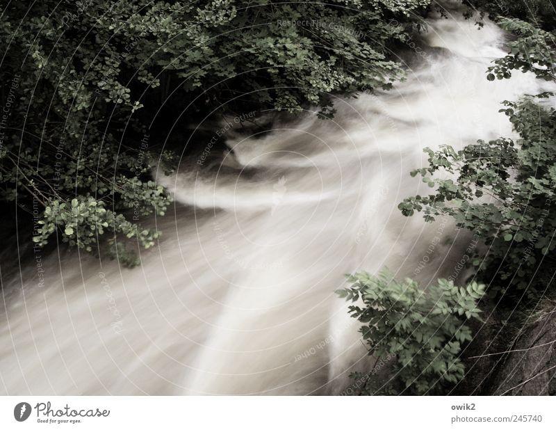 Schön festhalten Umwelt Natur Landschaft Pflanze Wasser Klima Schönes Wetter Baum Blatt Laubwald Wald Flussufer Bach bedrohlich kalt natürlich Kraft Bewegung
