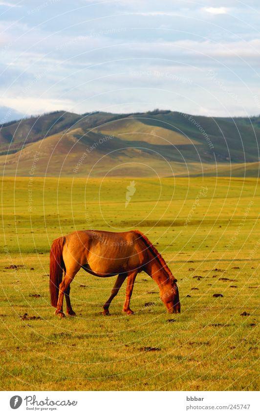 Himmel Natur blau grün Sommer Ferien & Urlaub & Reisen Wolken Einsamkeit Tier Ferne gelb Wiese Freiheit Umwelt Berge u. Gebirge Landschaft