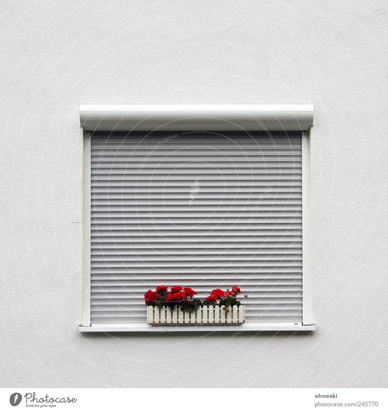 Aufsteh´n! Blume Pelargonie Haus Einfamilienhaus Mauer Wand Fassade Fenster rot Müdigkeit Einsamkeit Ordnung Jalousie geschlossen schlafen Blumenkasten Farbfoto