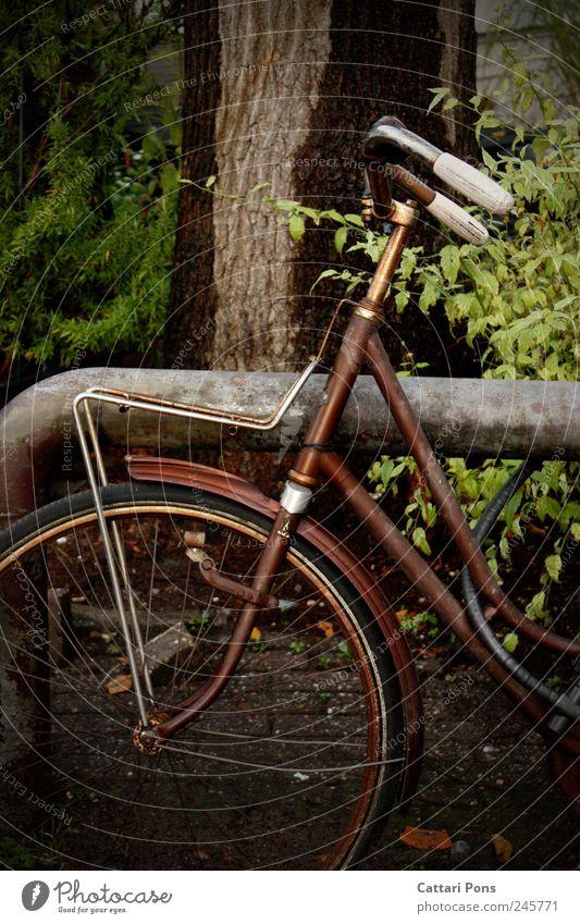 chameleon-bike alt Baum Pflanze Einsamkeit dunkel braun Fahrrad Freizeit & Hobby dreckig Ausflug stehen Sträucher dünn Rost trashig Verkehrsmittel