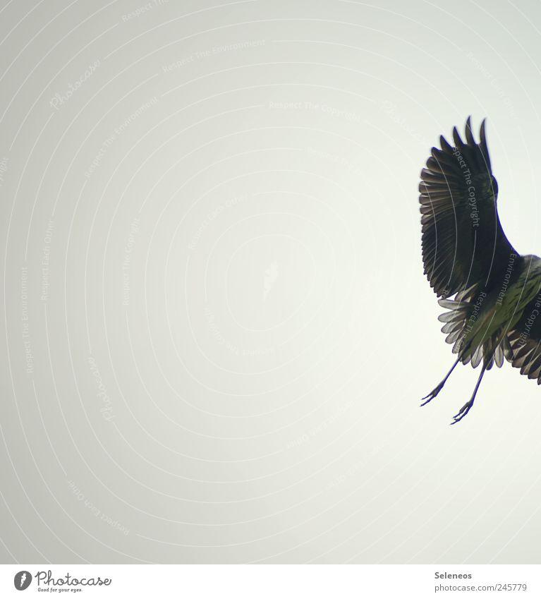 fast weg Himmel Natur Tier Umwelt Vogel Wetter Ausflug fliegen Geschwindigkeit Feder Flügel Wildtier Wolkenloser Himmel Reiher