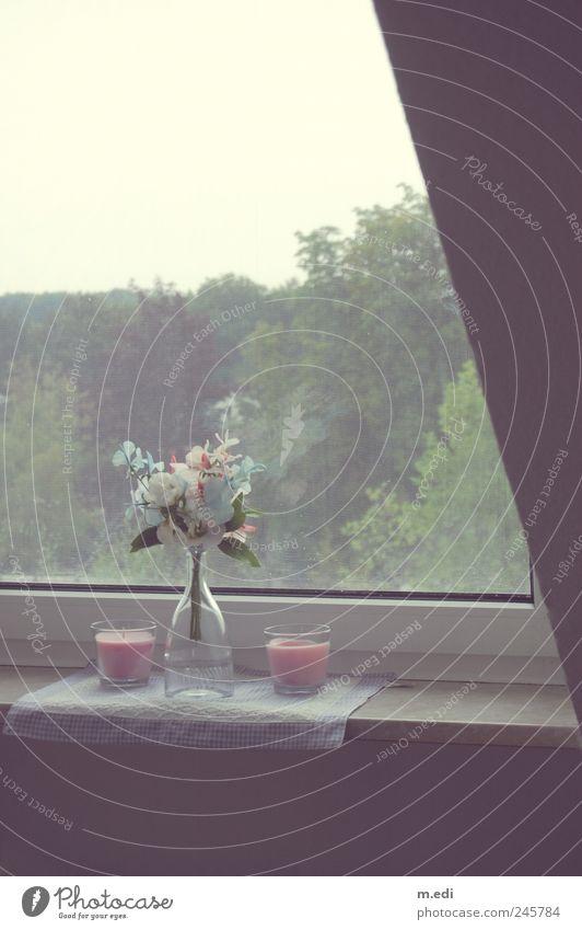 Home Impression Pflanze Blume Fenster Garten Kerze Dekoration & Verzierung Kitsch Flasche Blumenstrauß