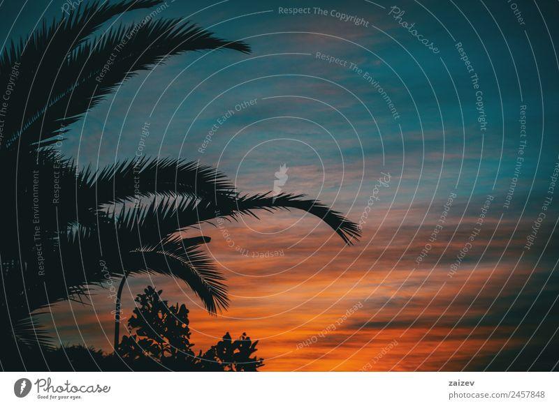 Orange und blaue Farben eines Sonnenuntergangs mit der Silhouette von Blättern und Bäumen ohne Blätter im Winter Design schön Landschaft Himmel Wolken Baum