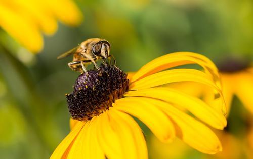 Zum Abflug bereit.... Ausflug Expedition Sommer Sonne Umwelt Natur Sonnenlicht Frühling Blume Blüte Garten Park Wiese Tier Nutztier Wildtier Biene Tiergesicht