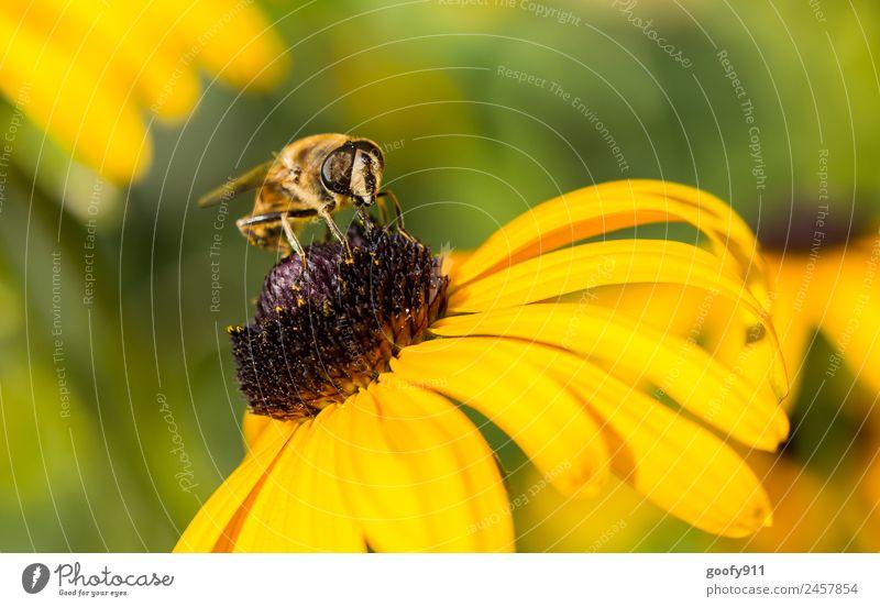 Zum Abflug bereit.... Natur Sommer Sonne Blume Tier Umwelt Frühling Blüte Wiese Garten Ausflug Park Wildtier sitzen Flügel beobachten