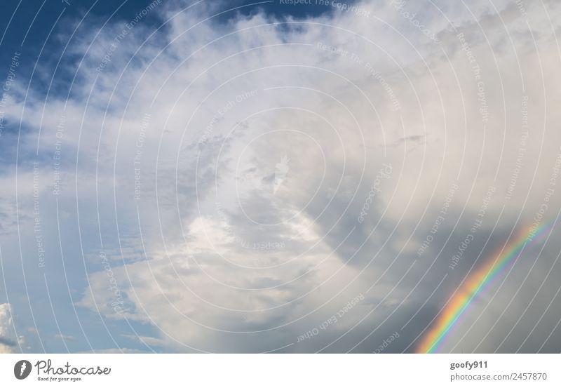 Nach dem Unwetter Umwelt Natur Himmel Wolken Gewitterwolken Sonnenlicht Wetter schlechtes Wetter Regen glänzend leuchten elegant Farbe Farbfoto mehrfarbig