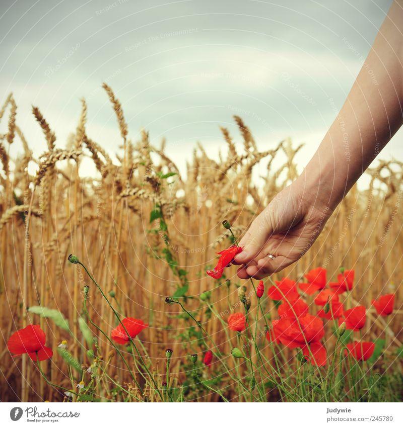 Die Blumenpflückerin Mensch Himmel Natur Hand schön rot Pflanze Sommer Wolken ruhig Umwelt gelb Stimmung Wind Arme Getreide