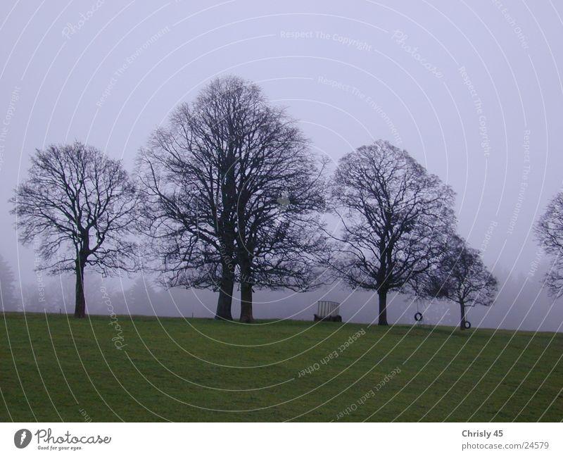 Bäume im Herbst Baum Nebel Einsamkeit Wiese Himmel