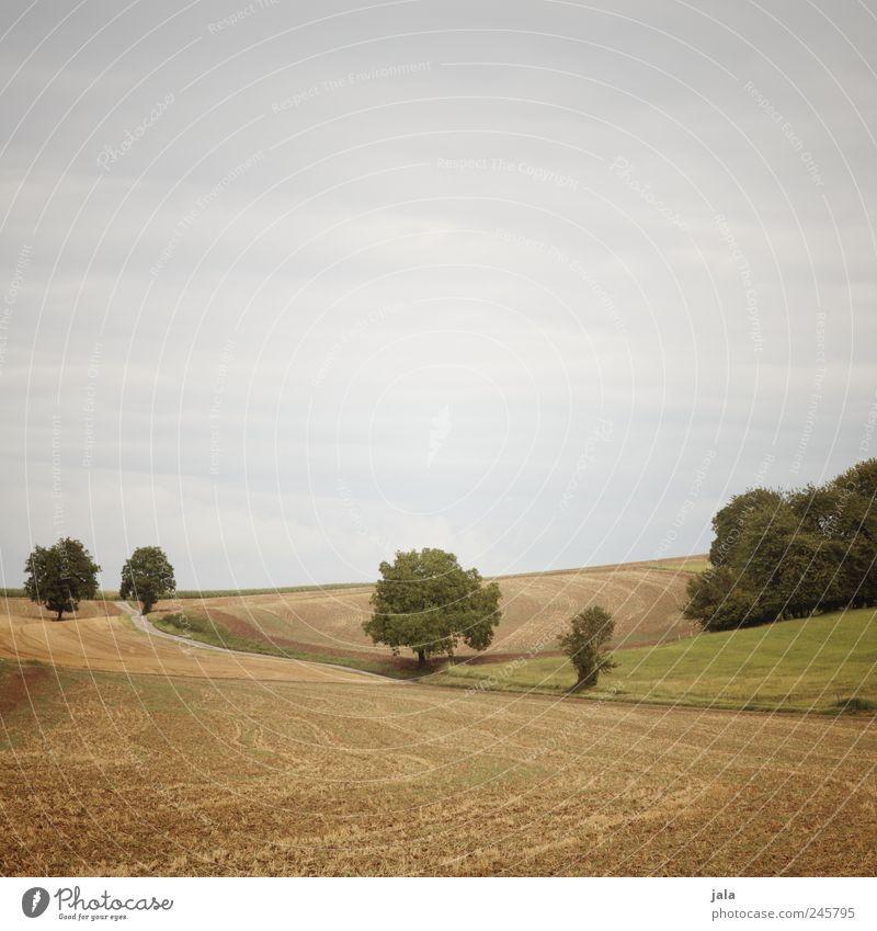 felder Umwelt Natur Landschaft Himmel Wolkenloser Himmel Sommer Pflanze Gras Grünpflanze Nutzpflanze Wildpflanze Feld blau gelb grün Farbfoto Außenaufnahme