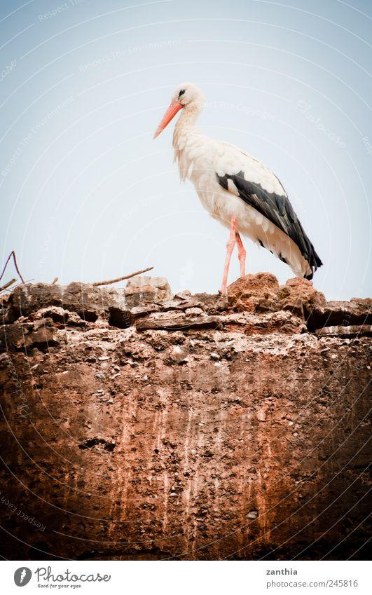 Storch Natur ruhig Einsamkeit Tier Mauer Umwelt Vogel Beginn ästhetisch Hoffnung stehen Kindheit Wandel & Veränderung Umweltschutz Umweltverschmutzung