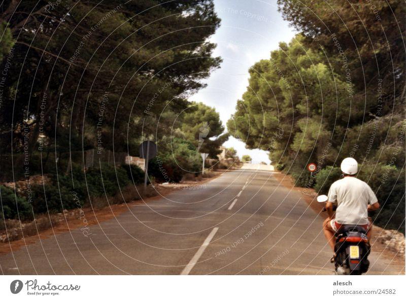 Ausflug Baum Sommer Ferien & Urlaub & Reisen Straße Berge u. Gebirge hoch aufwärts Allee Kleinmotorrad Mallorca Motorrad